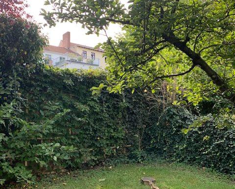Garten mit Grün