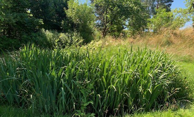 kleines Biotop Teich